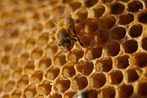 The Honey Hunter: Wink, wink