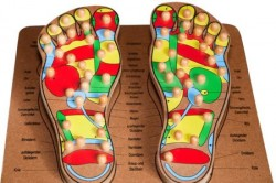 Foot Reflexology - Model Foot displaying Pressure Points