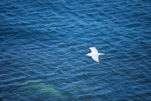 white bird flying against blue sea