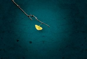 Single yellow ginkgo leaf on branch,against the background of dark wall.