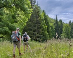 Hikers in the forrest