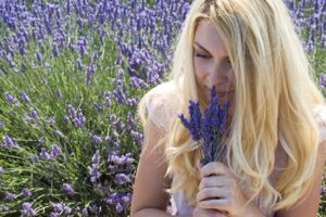 Woman smelling bunch of lavender in a lavender field