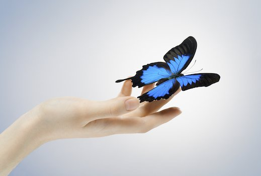 A butterfly sitting on a woman's hand