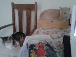 Jane Minton's cats