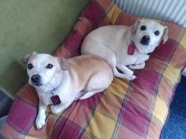 Jane Minton's dogs