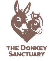 Screenshot of the Donkey Sanctuary