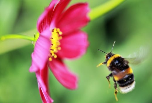 Insects: why they're so great for our gardens