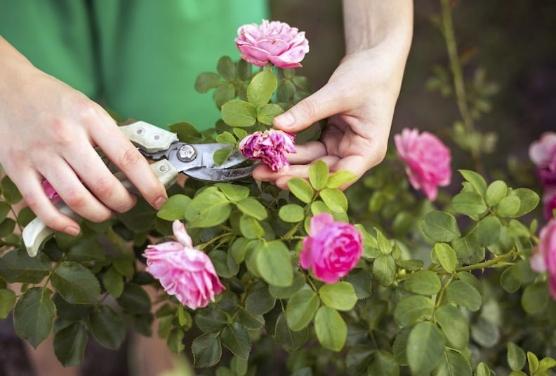 Rosie's gardening tips for September