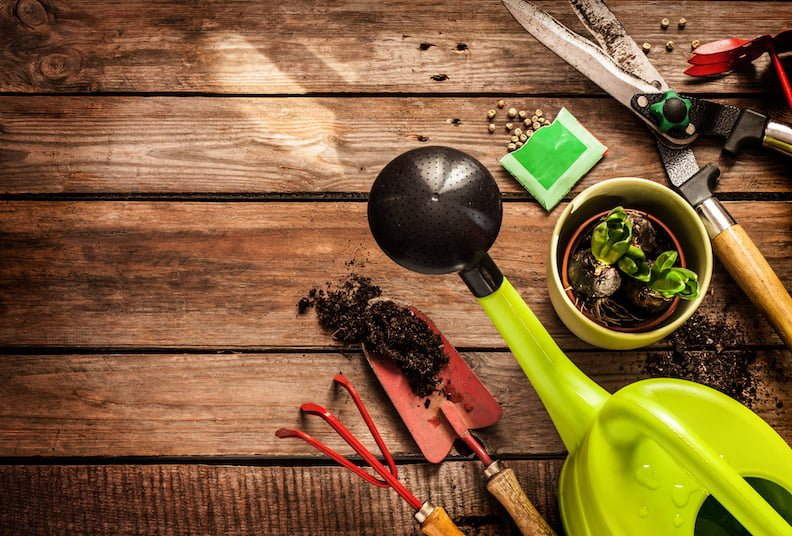 Gardening tools, watering can, seeds, plants and soil on vintage wooden table. Spring in the garden concept background