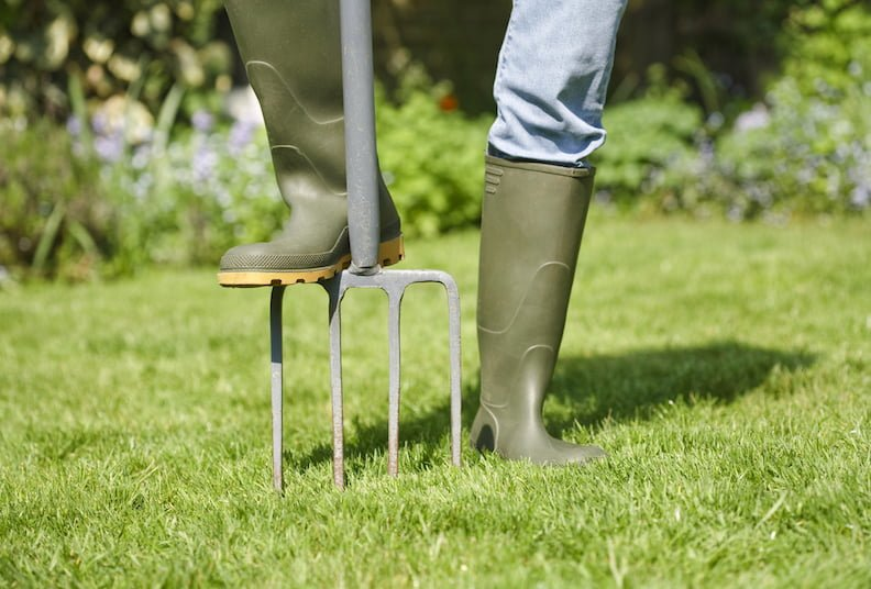 Rosie's gardening tips for September