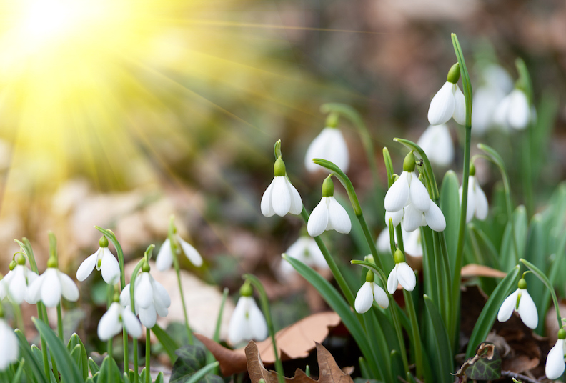 10 ways to enjoy your second spring